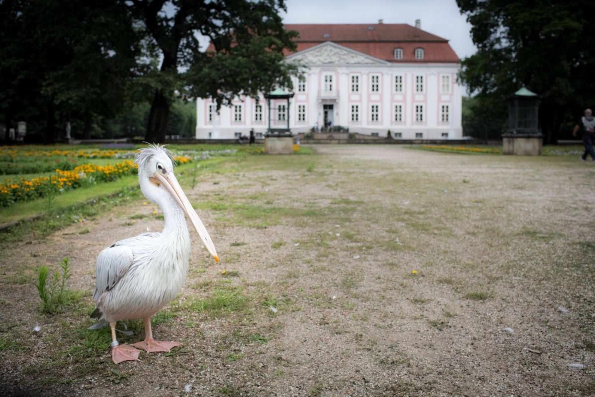 Hochzeit Schloss Friedrichsfelde