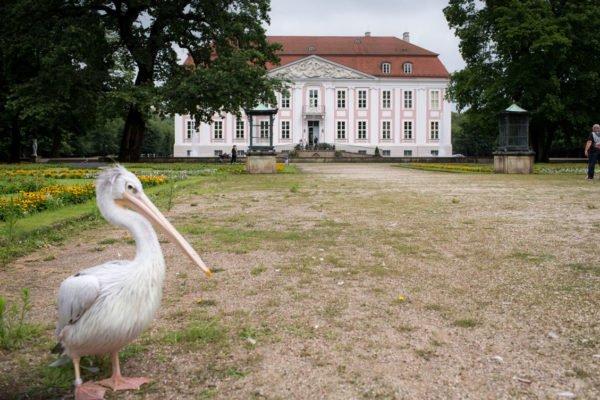 - Hochzeit_Schloss_Friedrichsfelde-(6-von-8)