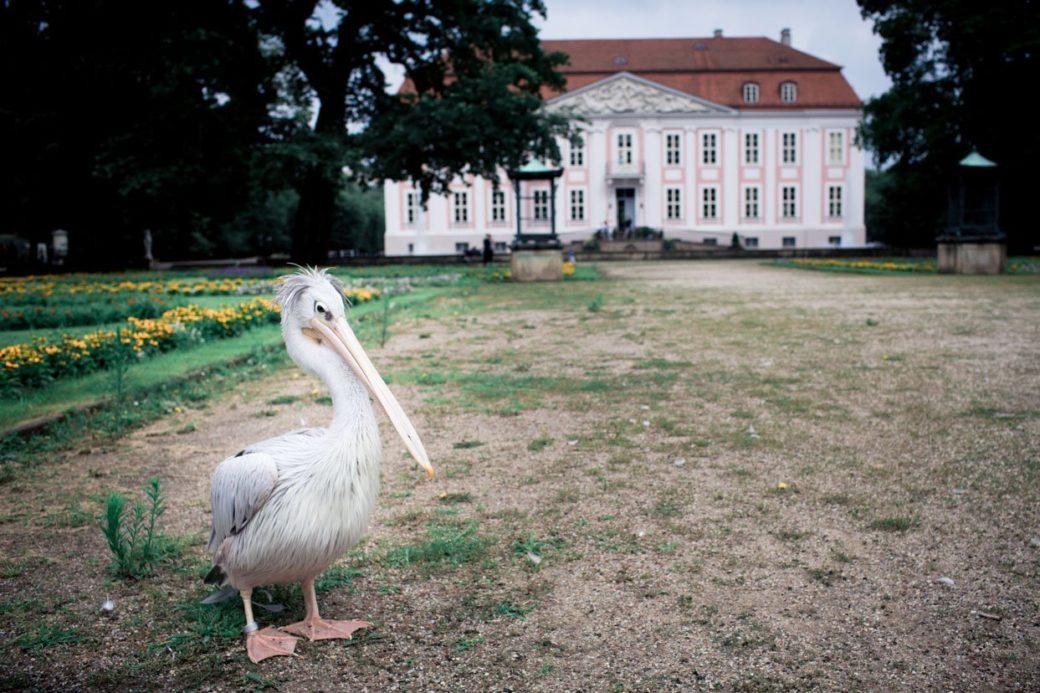 Hochzeit_Schloss_Friedrichsfelde_FO-(6-von-9)
